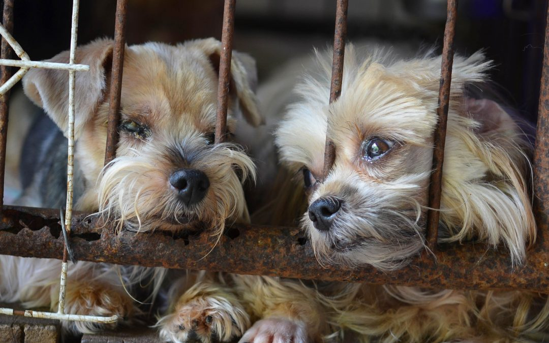 End Animal Suffering: Stop Puppy Mills