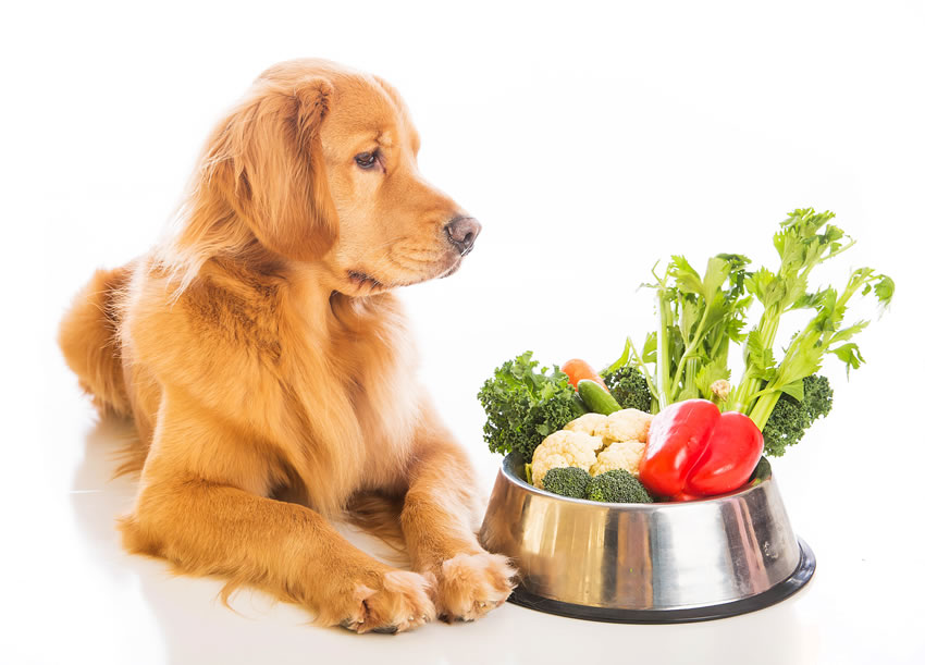 The Best Dog Food Choices