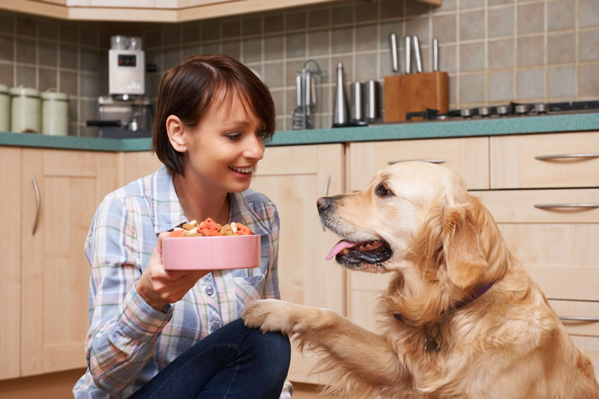 Food that Your Dogs Should NEVER Eat