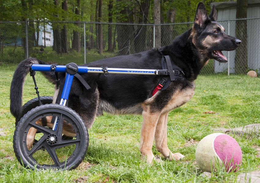 Taking Care of Special Need Dogs